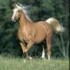 horses-and-besta