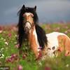 love-x-horse-x-love