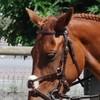chevaux-horse-06
