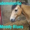 M00DY-BLUES