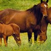 cheval-news-x3