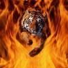 tigre2701