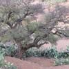 hicham-raja-maroc12