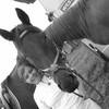 lovehorse1601