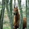 choices-horse