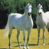 passiion-cheval-x3