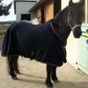 lovinghorse