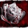 rose-noire-fic