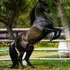 la-vie-des-chevaux