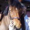 chevauxdamours