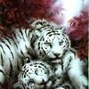 passion-tigres72