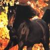 chevauxdemiss85
