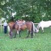 Horse-O-Passion