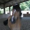 chevauxdumonde08