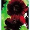 jardin-fleurs-pourpres