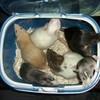 la-vie-des-rats