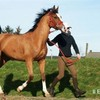 poney-chevaux-shetland