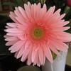 photos-fleurs-31