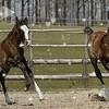 caballo38