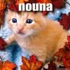 tamer-nouna1309