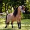 horses-breed-x3