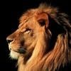 kingsofriad12