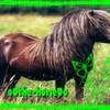 o0the-horse0o