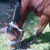 Horse----x3