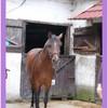 concours-de-chevaux