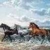 chevauxdepassion