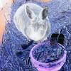 montage-temps-des-lapins