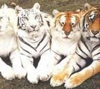 4 couleurs différentes, magnifiques!