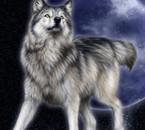 les loups, ma folie