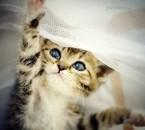 album ma passion des chats