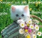 joli petit chat!