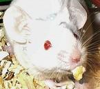 Calcium dans le bain (12.11.2007 - 07.12.2009) †