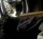 mon petit chaton 3 mois.