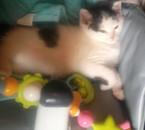 Mon chat réglisse