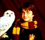 Harry & Hedwige