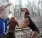 Courage et Eva ( De http://photosofmydogs.skyrock.com )