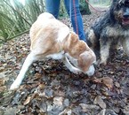 Balou et Crunch ( De http://photosofmydogs.skyrock.com )
