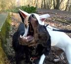 Fripouille et Filou ( De http://photosofmydogs.skyrock.com )