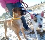 Belle et Filou ( De http://photosofmydogs.skyrock.com )