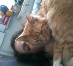 moi et l homme de ms reves mn chat