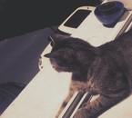 Mon chat Azrael ♥