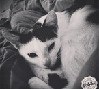 #cat #instachat #auchaud #pretty #enjoy #princesse #beautiful #love #Perfect #insta #instagood #inst