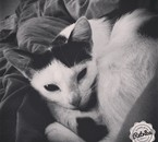 Jane mon 2ème chat <3