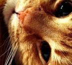 Mon chat s'appelle Bob comme l'éponge; c'est un sale chat.