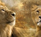 le lion est mon animal préféré car c est le roi ! :p