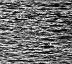 """""""Abstrait, Noir et Blanc"""" sur Niou-x-romance"""